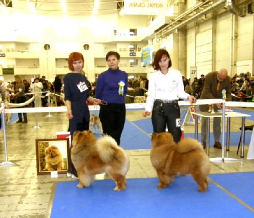 826697423 11 12 2011 fci cacib in kiev ukraine. big boston liuto guolis exc. cac cacib bob. judge jurate butkienelithuania
