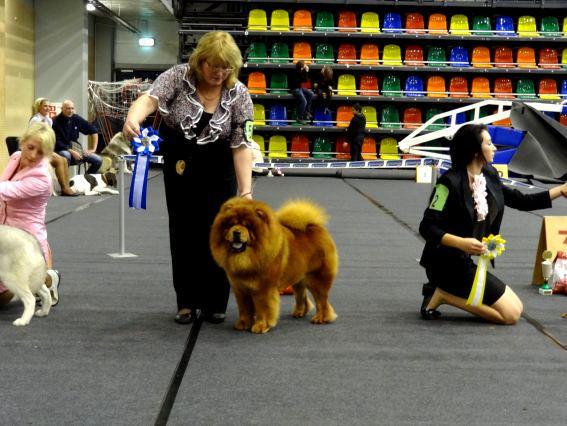 849111295 fourth chance lietuvos liutas_2011 12 10 _dog show in liepaja_big 2_ judge georgij schogolgeorgia_ 681