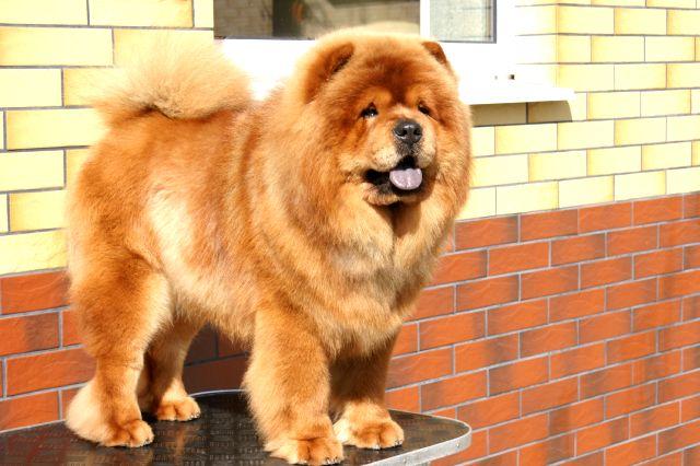 Top Big Dog Names